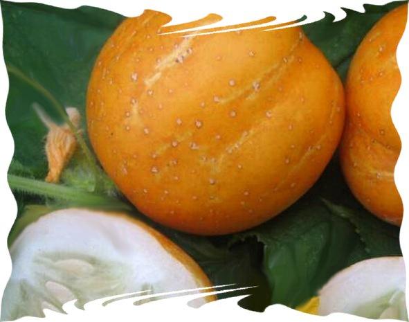 Möhren /'Gonsenheimer Treib /'  schmackhaft Anbau unter Glas  Karotten Samen 40506