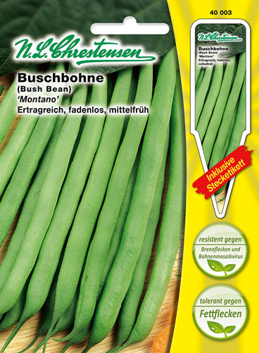 "Riesen Stangenbohne  /""Metro Rouge/""  Phaseolus vulgaris,fadenlos bis 60 cm Bohne"