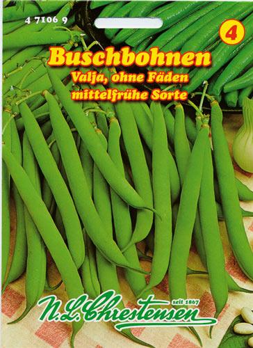 40002 Buschbohne Doppelte holländische Prinzeß grün Bohne ohne Fäden Saatgut