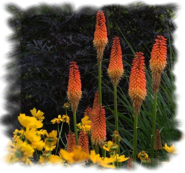8f44fe1e5dda8 Bio Samen,Blumensamen ,Samen, Samenraritäten , Gemüsesamen ...
